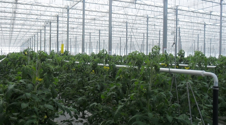 IFT Project Development